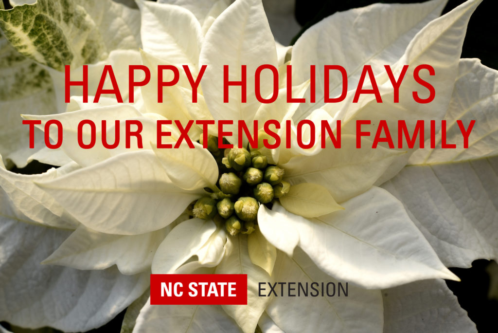Extension holiday card pic_Princettia Pure white poinsettia