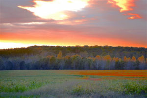 Cover photo for Forestry and Hunting Meeting - Tuesday, June 5
