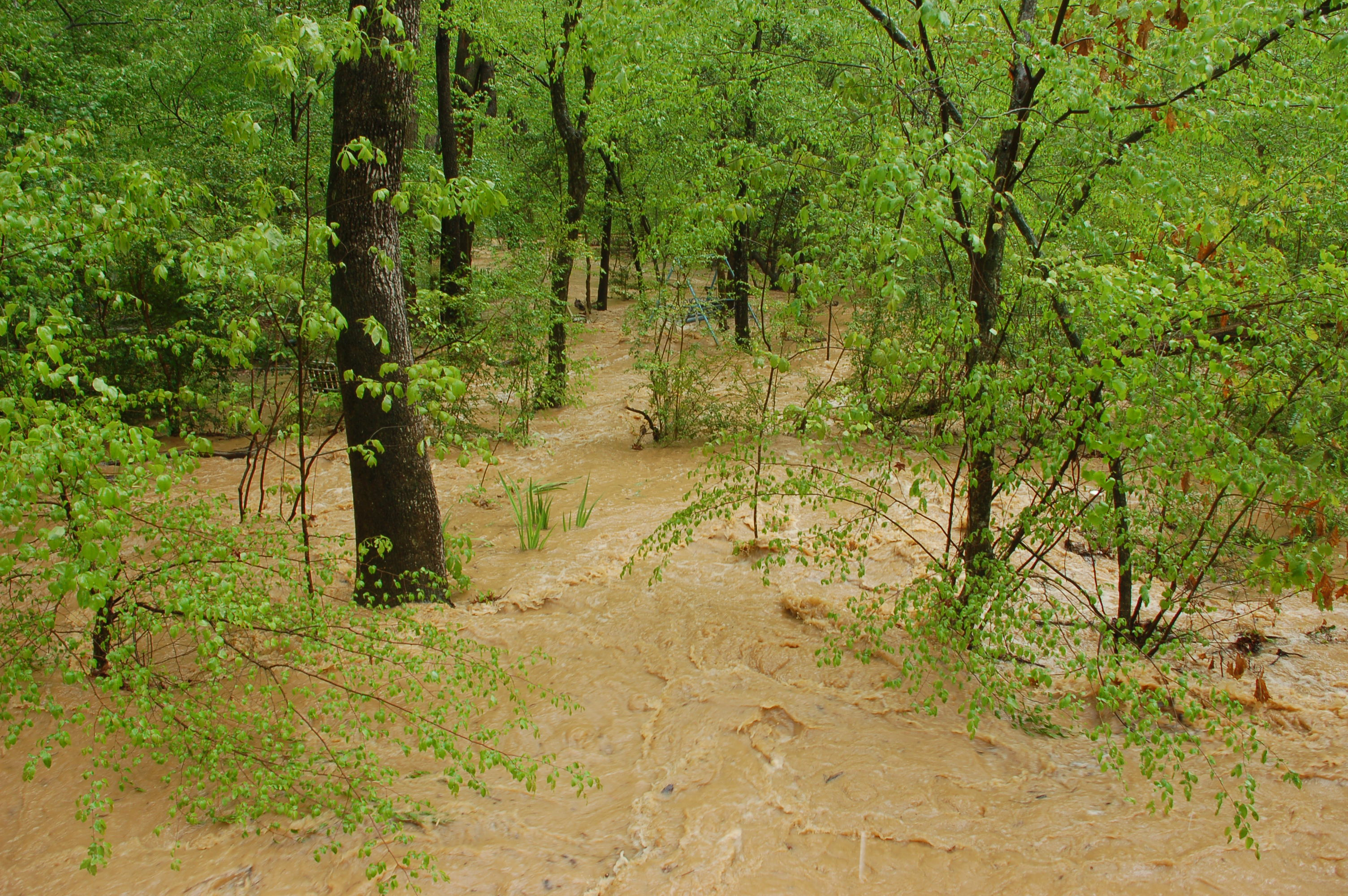 A creek flooding a forest in North Carolina
