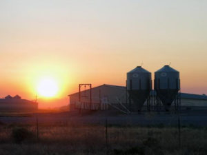 Sunset behind a N.C. hog farm